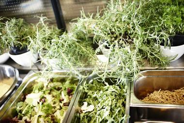 Urter og salat
